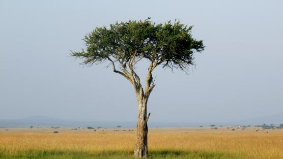 Kenya - Safari