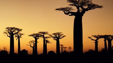 Fascinante Madagascar
