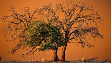 Namibie-Chobe-Chutes Victoria