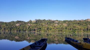 Amazonie Bolivienne : Chalalan