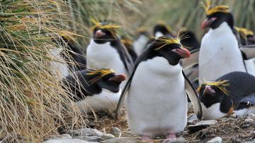 Îles Falkland, Géorgie du Sud et Antarctique