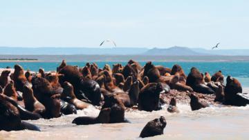 Patagonie: de l'Atlantique aux Andes