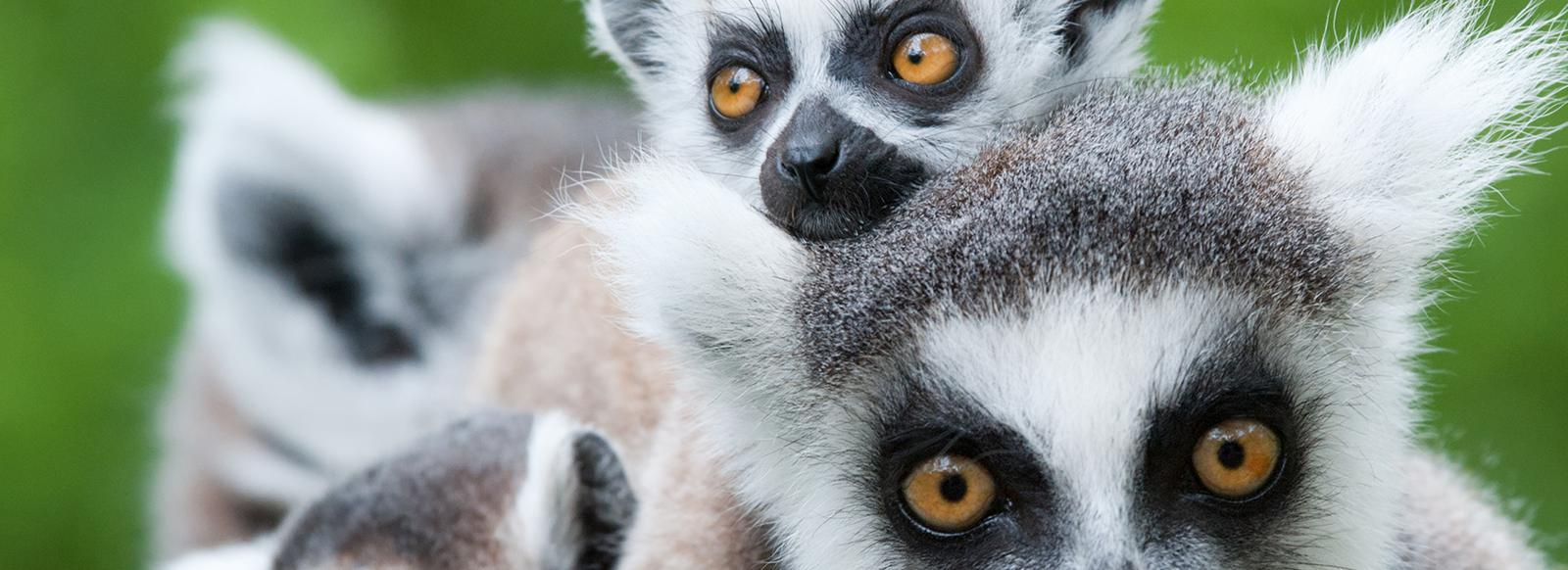 Madagascar - Circuit privé