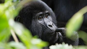 Ouganda - Safari