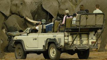 Merveilles du Botswana