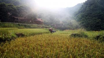 Vietnam du Nord - Circuit privé