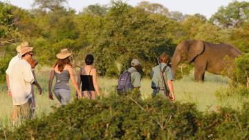 Safaris à pied dans le Kruger