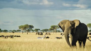 Le Serengeti en un coup d'aile