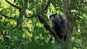 Nos amis les primates