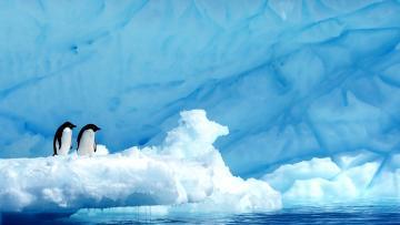 Mer de Weddell et plateformes de glace de Larsen