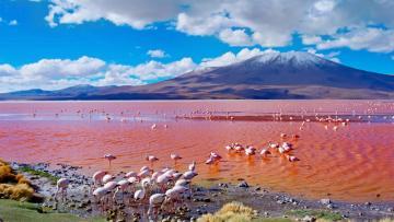 Lacs salés & Lagunes des Andes