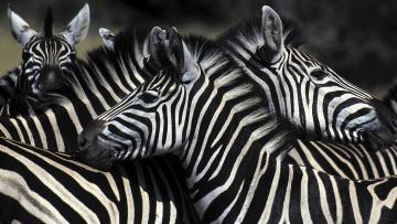 Au coeur du Masai Mara