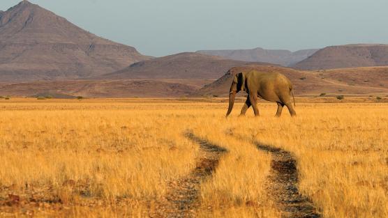 Namibie - Autotour