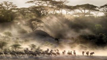 Rêves africains