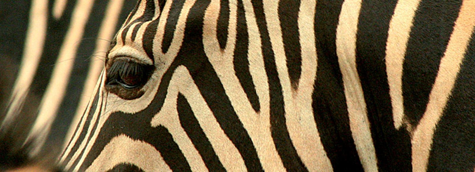 Zimbabwe - Flying safari