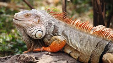 L'Essentiel des Galapagos