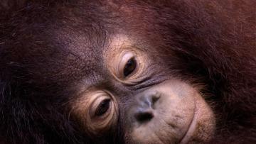 Sumatra du Nord
