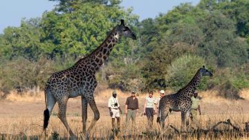 A travers le Luangwa