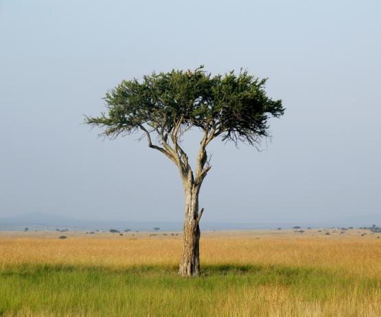 Site de rencontre somali au Kenya