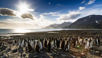 Eclipse solaire 2021 : croisière en Antarctique, en Géorgie du Sud et aux îles Falkland